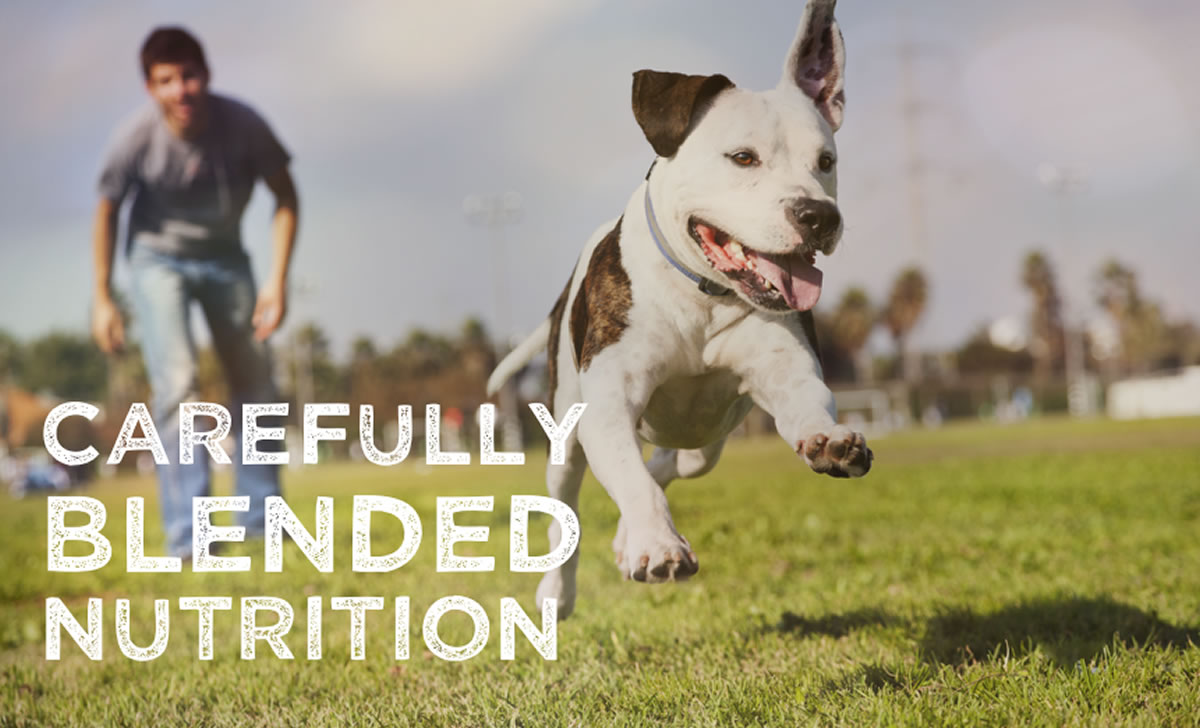 A Carefully Blended Nutrition For Your Dog